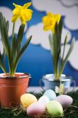 Colored eggs and flowers in pots — Stock Photo