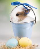 Coelho em um balde azul, ovos — Fotografia Stock