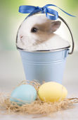 Bunny in a blue bucket, eggs — Stock Photo