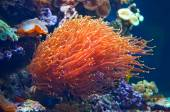 Colorful underwater flora in aquarium — Stockfoto