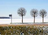 Winter embankment with three trees and nonane pointer — Stock Photo