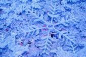 Snowflakes christmas background — Stock Photo