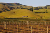 Napa Valley vineyard at sunset — Stock Photo