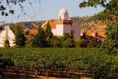 Napa Valley vineyard at sunset — Stock Photo