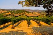 Browth houses on Napa Valley vineyard — Stock Photo