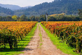 Countryside view of Vineyard in Napa Valley — Stock Photo
