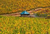 Vinic v napa valley — Stock fotografie