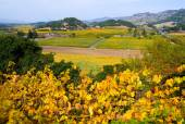 Landscape of Vineyard in Napa Valley — Stock Photo