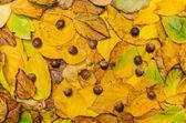 Autumn leaves (actinidia)background, texture with acorns — Stock Photo