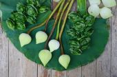 Flores de loto verde — Foto de Stock