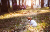 Small puppy in forest — Stock Photo