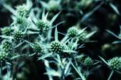 Close up of a dry thorny plant — Stock Photo