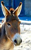 驴的特写肖像 — 图库照片