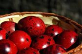 Red quail eggs in basket — Stock Photo