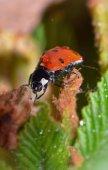 Marienkäfer auf grünem blatt — Stockfoto