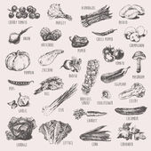 Collection of hand drawn vegetables, high detailed, vector illustration, sketch, engraved style — Stock Vector