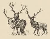 Hand drawn Deers sketch — Vecteur