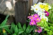 Beautiful colorful flowers — Stock Photo