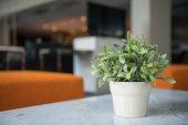 Green plant in room — Stockfoto