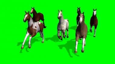 Group running horses — Stock Video