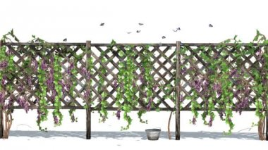Fence with vine tendrils — Stock Video