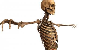 Human skeleton with detailed anatomy organs - tracking shot — Stock Video