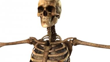 Human skeleton with detailed anatomy organs - tracking shot — Stock Video