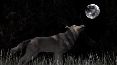 Wolf Howling At The Moon — Stock Video