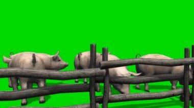 猪木栅栏-绿色屏幕背后 — 图库视频影像