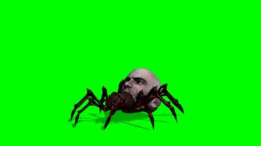 Bad spider with human head — Stock Video