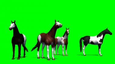 Group of horses on green background — 图库视频影像