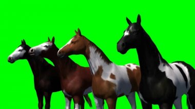 Group of horses on green background — Stock Video