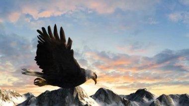 Bald eagle flies over mountains — Stok video