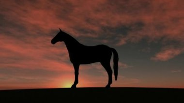 Horse silhouette Rise in Sunset — Стоковое видео
