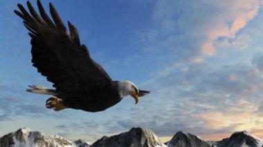 秃头鹰飞过山 — 图库视频影像