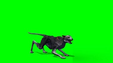 Devil cat attacking on green background — Stock Video