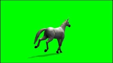 Unicorn running on green background — ストックビデオ