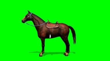 Horse looks around — Stock Video