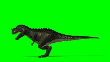 Dinosaur Tyrannosaurus T-Rex smells prey — Stock video