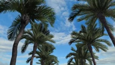 Palm Trees with blue sky — Stock Video