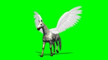 Pegasus horse walks on green screen — Stock Video