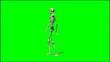 Male skeleton walks — Stock Video