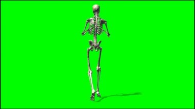 Male skeleton sneaks — Stock Video