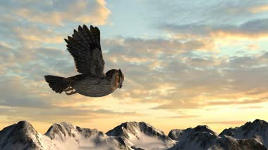 Owl flying in sky — Stock Video