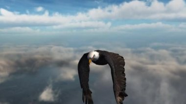 Bald eagle flaps in sky — Stock Video