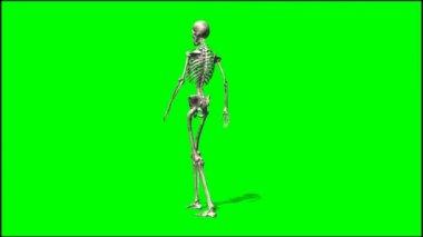 Male skeleton walks — Stock Video