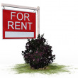 For Rent board sign — Stock Photo #70251571