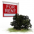 For Rent board sign — Stock Photo #70251573