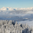 Beautiful view of the snow-covered spruces, mountains and low clouds in winter. — Stock Photo #54580525
