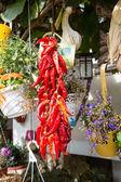 赤唐辛子の束 — ストック写真